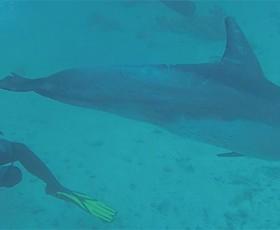 Buceando con delfines en el Mar Rojo