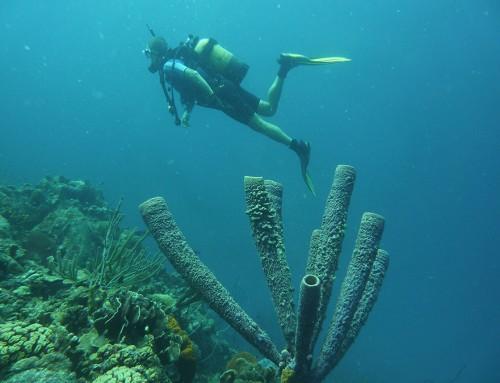 Guia de Navegación de Bonaire. Cruising Guide